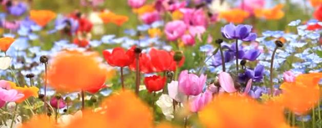 Offrons-nous des fleurs