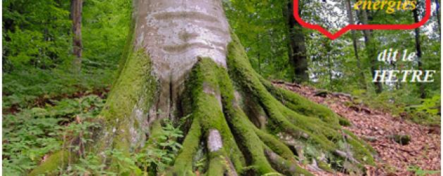 Apprendre à dialoguer avec un arbre