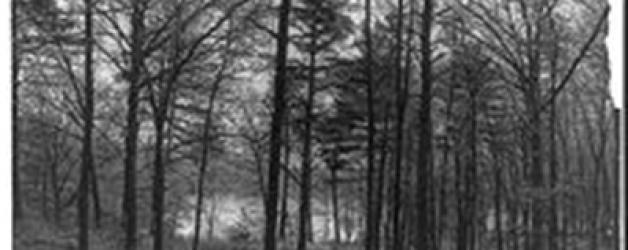 Entre l'homme et la nature